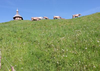 Altweibersommer in Vorarlberg